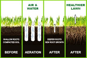 Aeration and Seeding 03